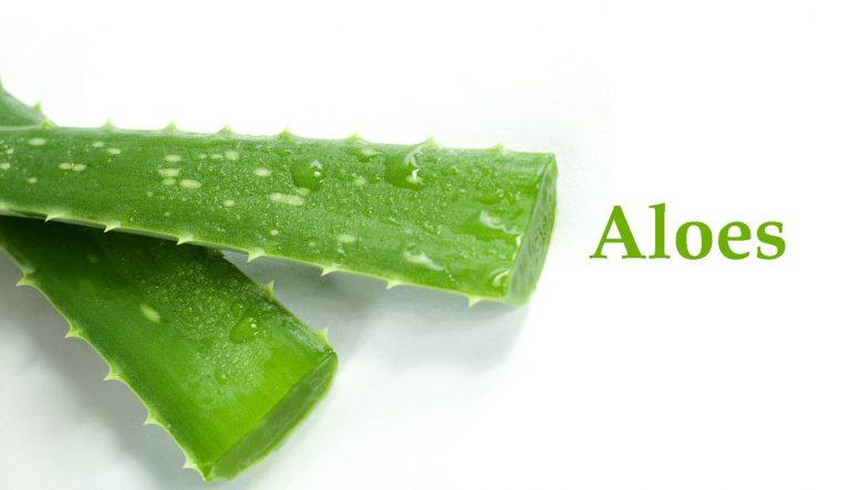 Odkrywamy składniki – Aloes